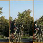boomonderhoud en boomverzorging
